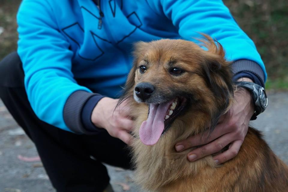 perro-en-adopcion-occidente-asturias