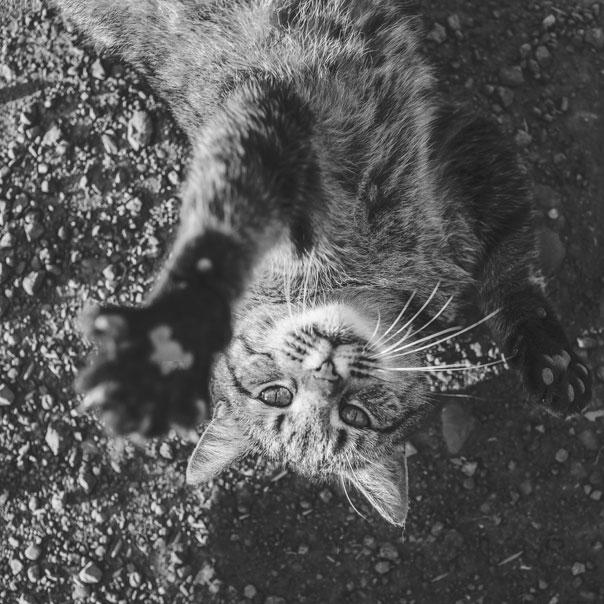 perros_en_adopcion