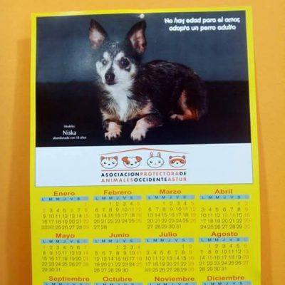 calendario17